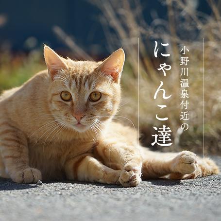 小野川温泉街の猫