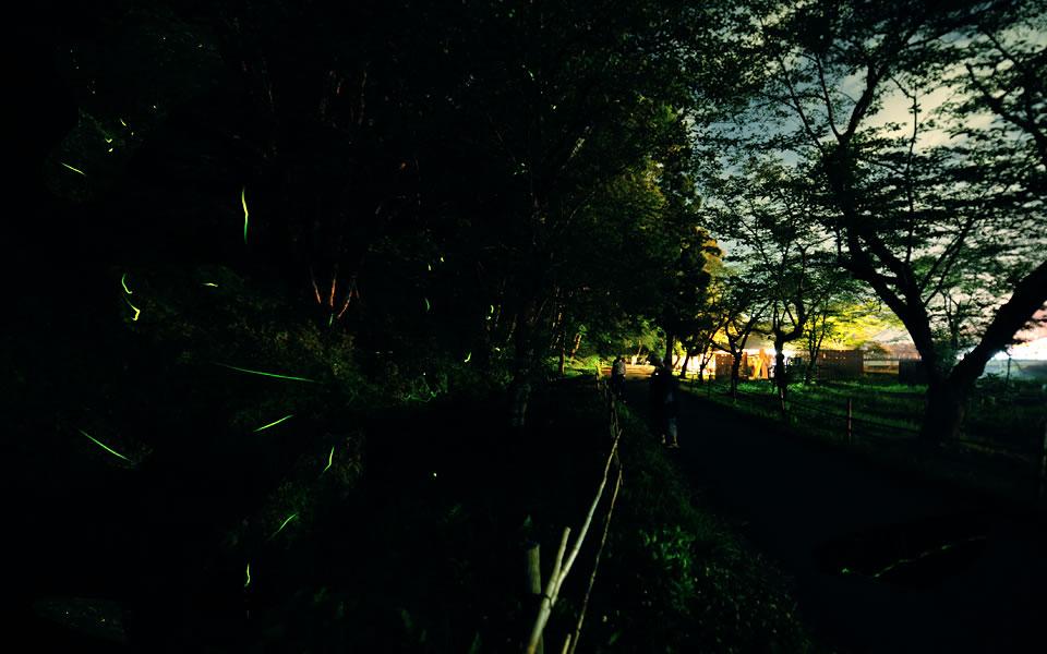小野川ほたる祭り